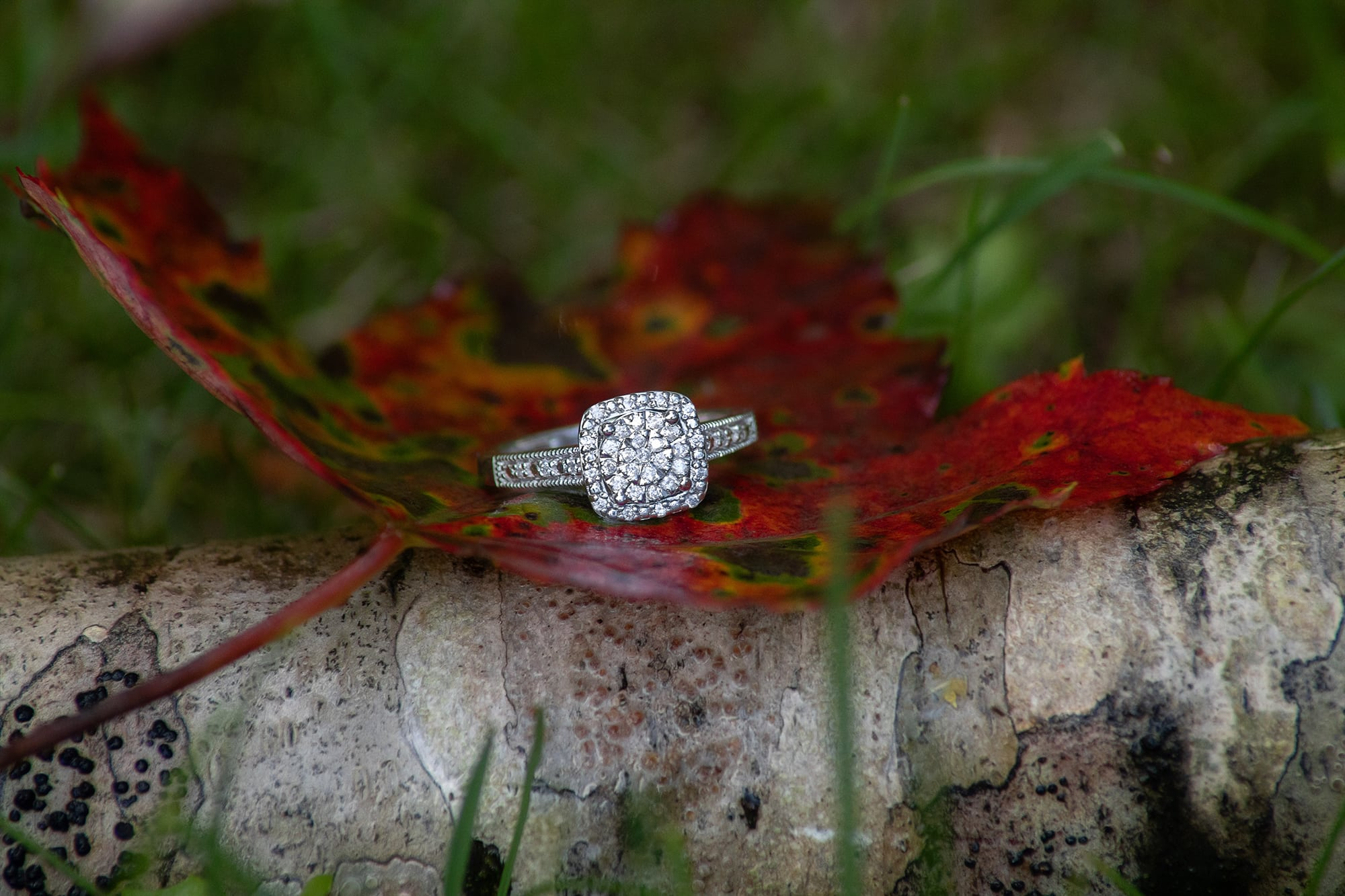 engagement ring banner elk nc photographer
